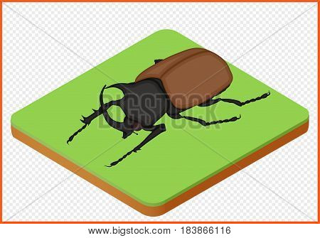 beetle isometric view. bug isolated. insect vector eps Illustration.