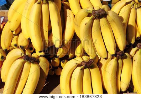Many bananas for sale in a greengrocery