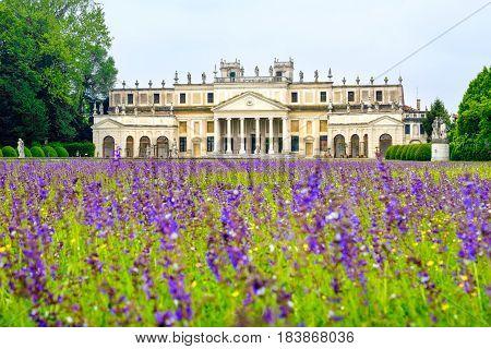 Villa Pisani purple flowers meadow Venice province Riviera del Brenta area - Venetian Villas - veneto region Italy