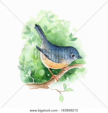 Springtime. Bird on branch. Watercolor illustration