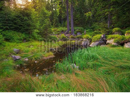 Picturesque forest glade in a mountainous area of the Czech provinces with a small pond illuminated by the rays of the sun.