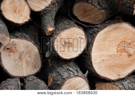Pile of wooden cut timbers outdoors on sunny day