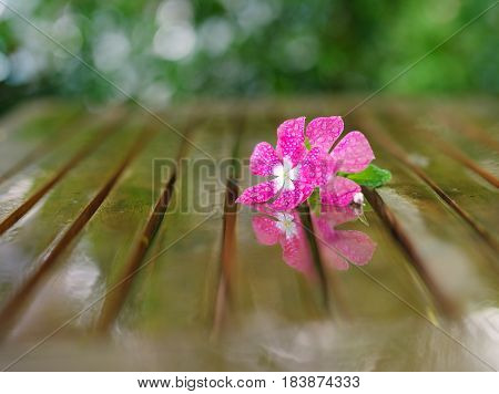 Wet nice pink flower in wet wooden table in garden with brilliant bokeh after rain
