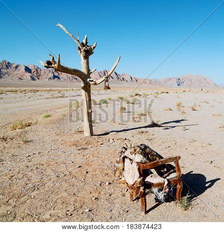 In   Iran Old Dead  Tree