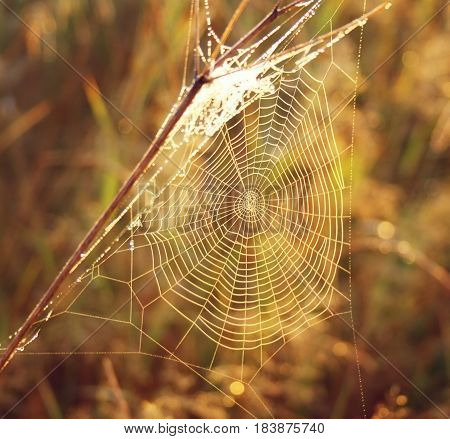 spider web on blurred Golden background with bokeh