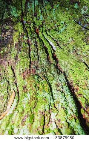 Close Up On A Decomposing Tree Bark Covered By Green Moss