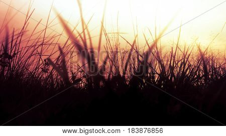 Beautiful Dusk Background
