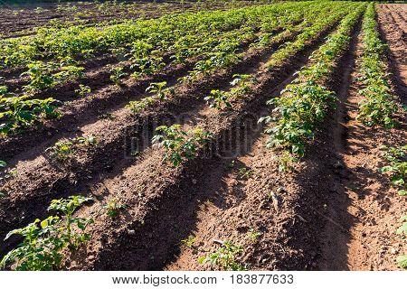 Furrows in a field in Peloponnese, Greece