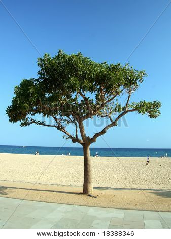 Single tree on Costa Brava coast. Malgrat de Mar.