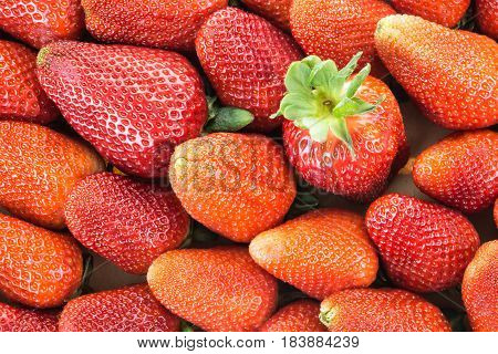Red Ripe Strawberries With One In Focus, Closeup Background.