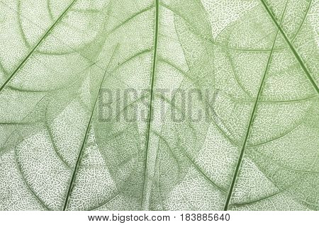 The leave leaf design abstract a background