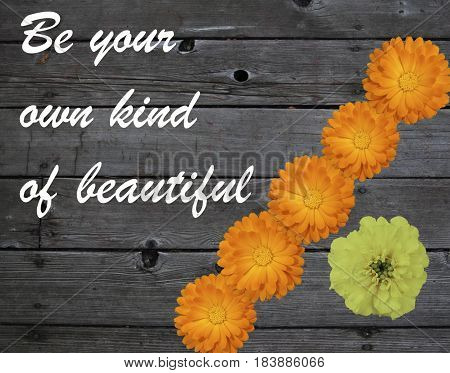 The words Be your own kind of beautiful above a wooden plank with orange marigolds depicting the crowd and a single yellow marigold depicting originality and uniqueness