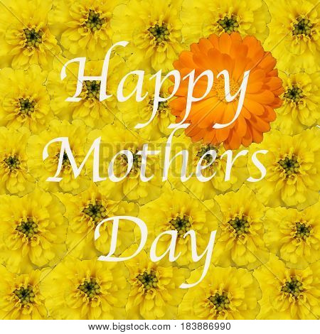 Bouquet of yellow marigolds with one orange marigold background for Happy Mothers Day message