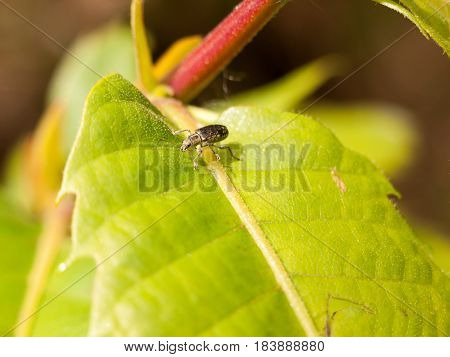 An Interesting Bug Walking Along A Bright Green Leaf Looking Cool And Productive Searching For Food