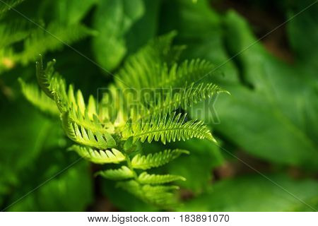 Beauty in nature exemplified by this fern photograph with a pronounced bokeh effect.