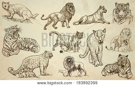 BIG CATS around the World.Collection of an hand drawn vector illustrations.Freehand sketches.Line art. Each drawing comprise of a few layers of outlines. Colored background is isolated. Easy editable.