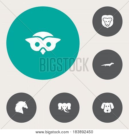 Set Of 6 Beast Icons Set.Collection Of Trunked Animal, Night Fowl, Gecko And Other Elements.