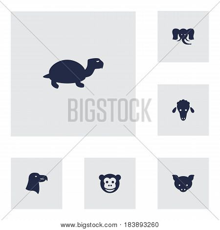 Set Of 6 Beast Icons Set.Collection Of Trunked Animal, Aquila, Tortoise And Other Elements.