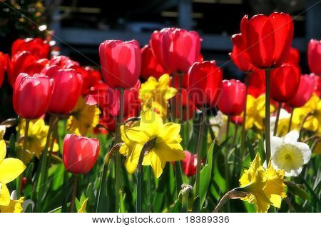 Flowerage #2.