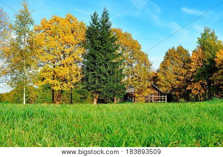 Autumn landscape -small house in yellow autumn trees in sunny autumn weather. Autumn nature view of wooden house in autumn forest -autumn rural landscape view. Autumn nature in sunlight
