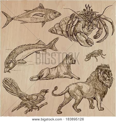 Animals around the World.Collection of an hand drawn vector illustrations. Freehand sketches. Line art. Each drawing comprise of a few layers of outlines.Colored background is isolated. Easy editable.