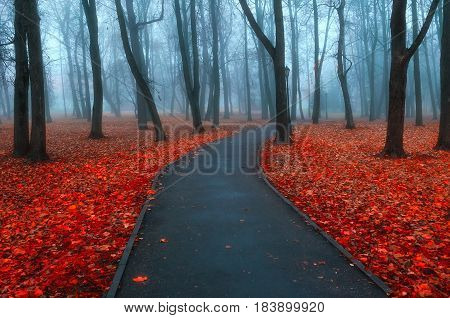Autumn nature -misty autumn view of autumn park alley in dense fog - foggy autumn landscape with bare autumn trees and orange fallen leaves. Autumn deserted alley in dense autumn fog.