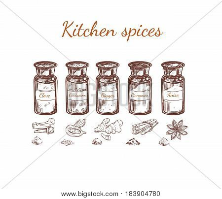 Hand drawn kitchen spices set with glass bottles of clove cardamom ginger cinnamon anise isolated vector illustration