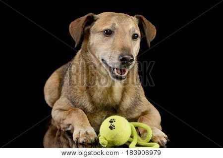 Studio Shot Of An Adorable Mixed Breed Dog With A Ball