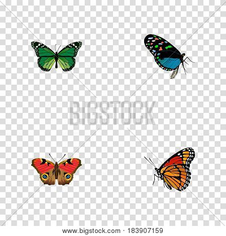 Realistic Milkweed, Hairstreak, Birdwing And Other Vector Elements. Set Of Butterfly Realistic Symbols Also Includes Monarch, American, Malachite Objects.