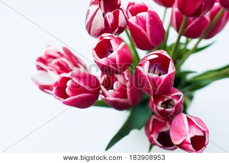 A bouquet of pink tulips in a vase on a white table top view. Copy space.