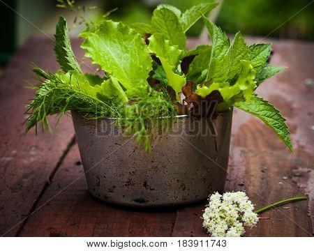 Fresh lettuce in rustic cup on a wooden background