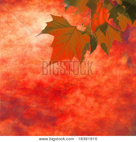 orange and red maple leaves on grunge autumn background