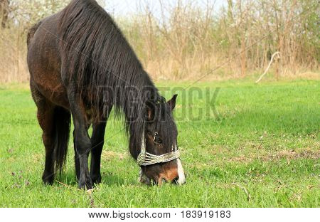 old horses in the meadow