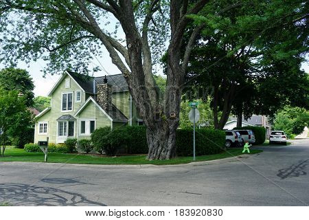 HARBOR SPRINGS, MICHIGAN / UNITED STATES - AUGUST 4, 2016: A large shade tree stands in front of a green single family home, at the corner of Harrison and Third Streets, in Harbor Springs.
