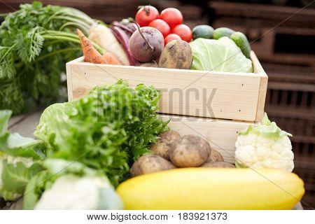 harvest, food nd agriculture concept - close up of vegetables on farm