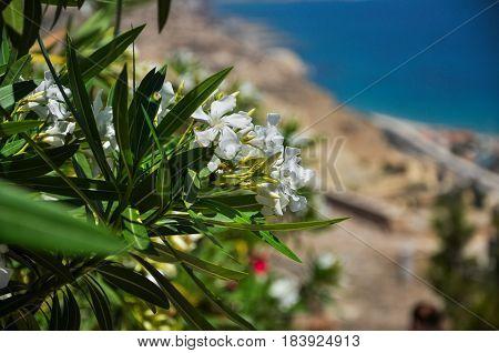 Flowers at Santa Barbara Castle in Alicante - Spain