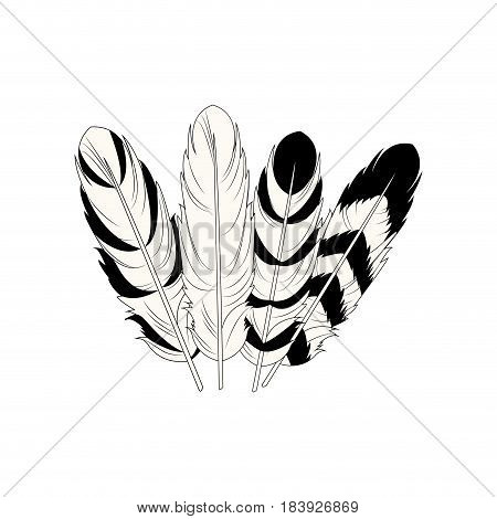 feather free spirit rustic decoration differents vector illustration