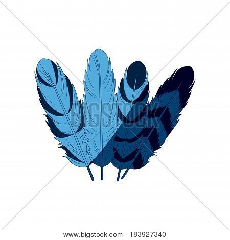 blue differents feather free spirit rustic decoration ornate vector illustration