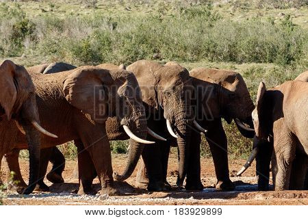 Elephants Standing Next To Each Other