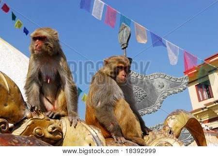 Monkeys at monkey-temple swayambhunath in Kathmandu, Nepal
