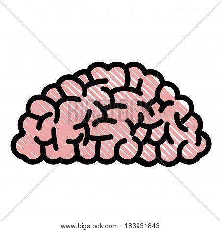 drawing brain human organ memory vector illustration