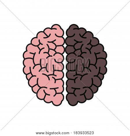 brain human hemispheres think knowledge shadow vector illustration