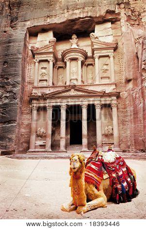Camel in front of world wonder Petra, Jordan