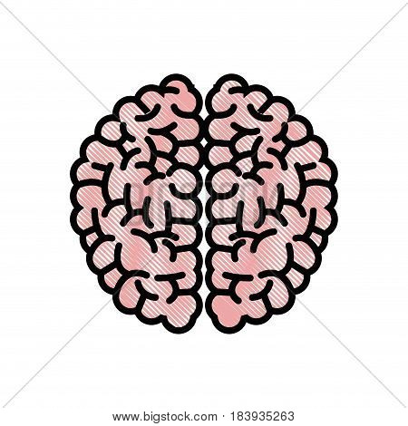 drawing brain human hemispheres think knowledge vector illustration