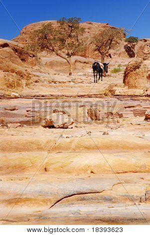 Donkey on natural cascades in canyon of world wonder Petra, Jordan