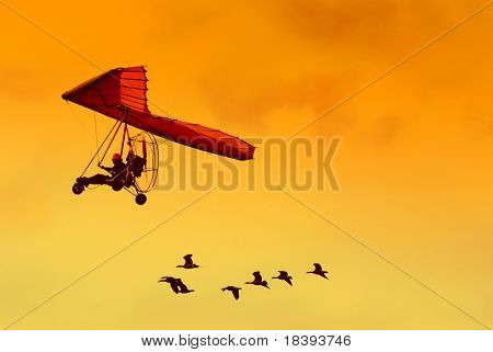 Flock of geese flying with their human friend in his ultra light airplane at sunset poster