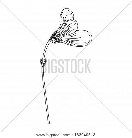 contour beautiful flower with petals botany plant, vector illustration