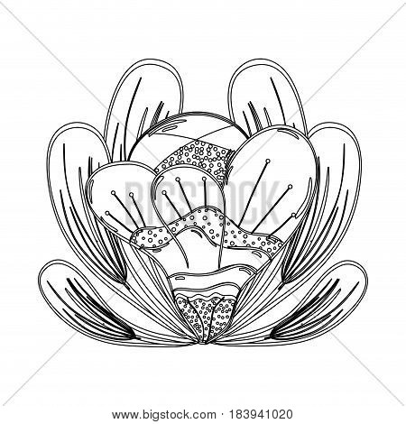 contour beautiful petals flower herbal botany, vector illustration