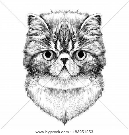 cat breed Exotic Shorthair face sketch vector black and white drawing