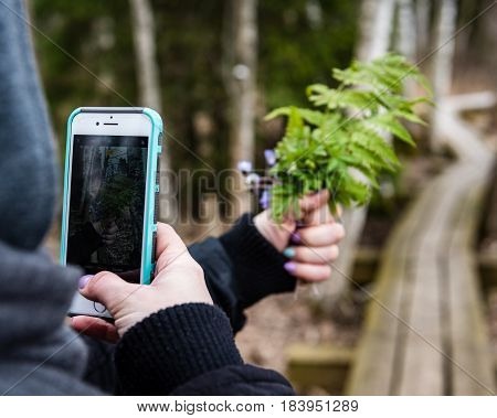 Anonymous Person Taking Pictures Of First Spring Flowers With Phone Camera